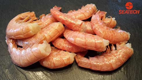 Argentine Red Shrimp Seatech Corporation